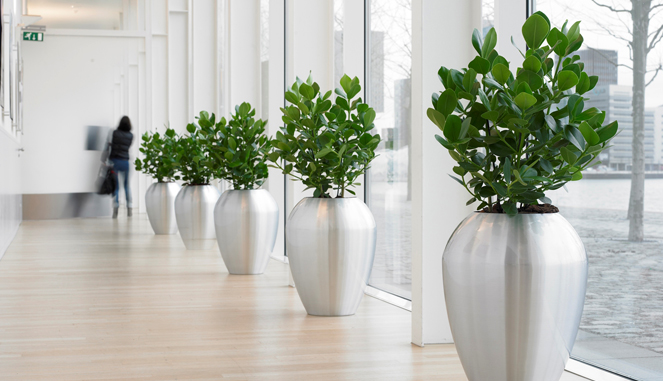 Delivering High Quality Plants To Your Office