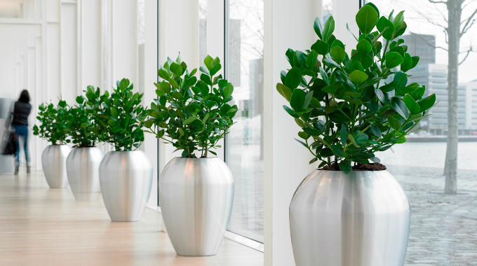 interior landscaping office.  Landscaping Interior Surrey Office Intended Landscaping E
