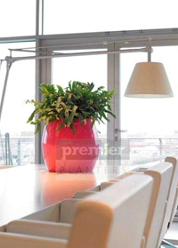 Planters for the office