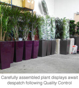 plants ready for dispatch