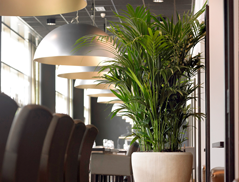 Statement Workplace Planters