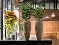 Transform Your Office With Plants
