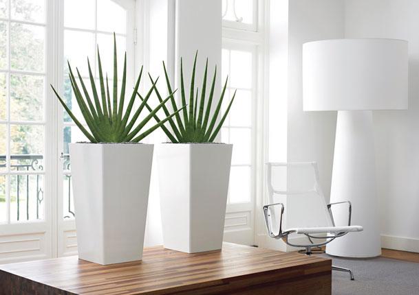 Designer Interior Landscaping