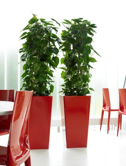 classy-office-plants