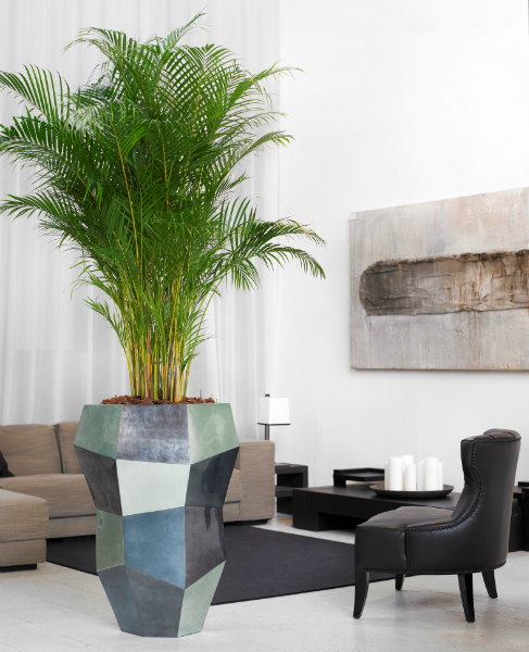 designer-planting