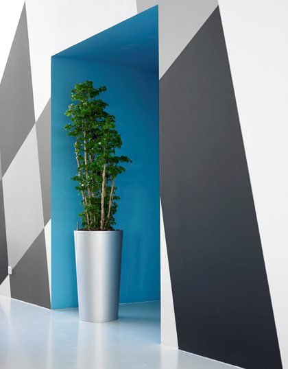 modern-office-plant