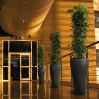 Tall corporate planting