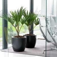boardroom-plants