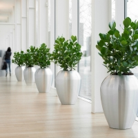 city-interior-planting
