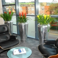 colourful-office-plants-in-polished-metal-pots_0