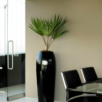 contemporary-office-plant