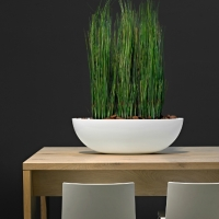 contemporary-table-plants