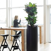 corporate-office-planting