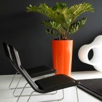 designer-interior-plants