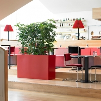 interior-trough-planting