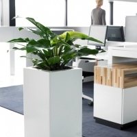 london-office-plants