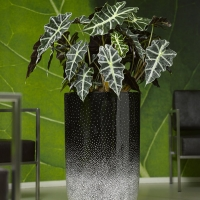 Egg Mosaic Planter With Stunning Plants