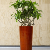 Office Planters Tall