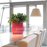 plants-for-meeting-rooms