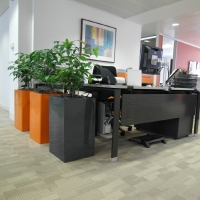 Brighten Up Your Reception Area With Plants