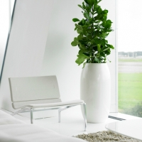 stylish-office-plant
