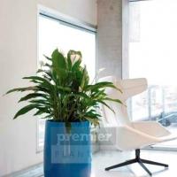 EC2A vibrant-plant-displays